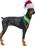 Santa Doberman Pinscher T-Shirt