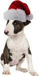 Bull Terrier Christmas