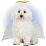 Angel Bichon Frise T-Shirt
