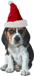 Santa Beagle Christmas T-Shirts