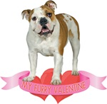 Bulldog Valentine