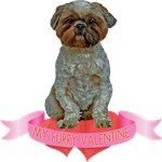 Lhasa Apso T-Shirt - Valentines Day
