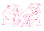 Bulldog Family Pink