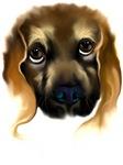 Big Doggy Eyes