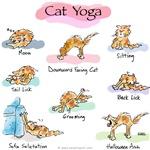 Cat YOGA POSES