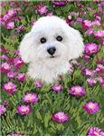 Bichon in Flowers