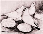 Saxon Spot Pigeons