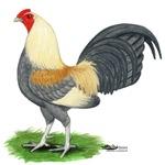 Blue Gold DW Cock