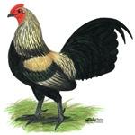 Brassy Back Cock