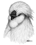 Silkie Rooster Head