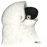 Helmet Pigeons
