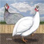 Loft Guinea Fowl