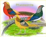 Pheasant Trio