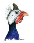 Guinea Head