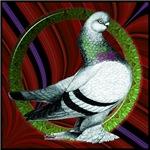 Berliner Circle Pigeon