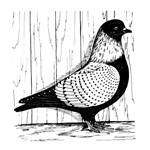 Starling Pigeon Silver