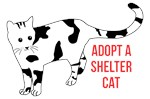 Adopt Shelter Cat