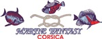 corsica fish 3