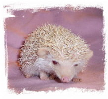 Pinky the Hedgehog