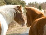 Best Buddies Horses