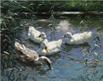 Floating Flock of Ducks