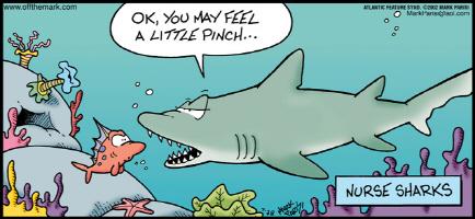 Shark Nurse Pinch
