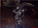 Xander, Magical Dog