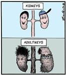 Kidneys Adultneys