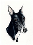 Black Greyhound Head