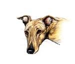 Brindle Greyhound Head