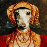 Elizabethan Iggy Italian Greyhound