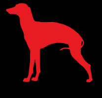 New Black Italian Greyhound Dog T-shirts!