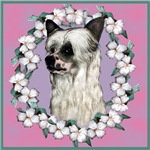Powder Puff Chinese Crested