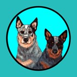 Australian Cattle Dog Pair