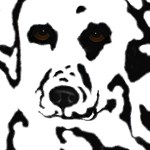 Dalmatian Design