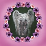 New Chinese Crested Design