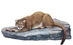 Mountain Lion T-Shirts