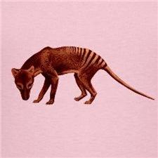 Thylacine – Tasmanian Wolf