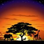 Wild Animals on African Savannah Sunset
