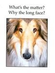 Long Face Collie