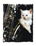 Sax-O-Cat Products