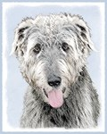 Irish Wolfhound - Multiple Illustraions