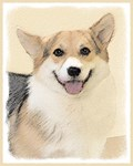 Pembroke Welsh Corgi-Multiple Illustrations