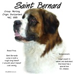 Saint Bernard (Rough)