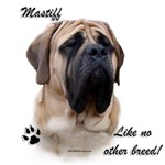 Mastiff Breed