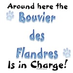 Bouvier Charge