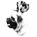 Mastiff Charcoal2