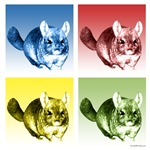 Chinchilla Pop