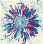 patriotic daisy I