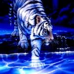 Mystical Tiger